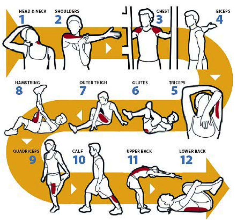 Male Static Stretching Chart: Don't Skip Your Warm-Up Or Cool-Down Post Exercise